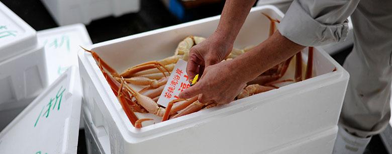 蟹に黄色のタグをつける