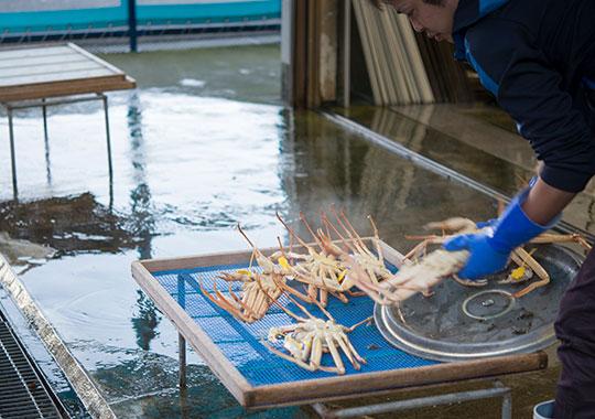とび魚さんのカニ蒸